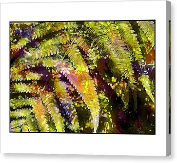 Fern In Dappled Light Canvas Print by Judi Bagwell