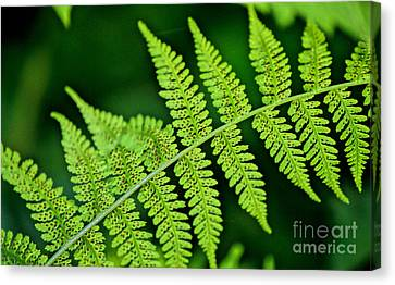 Fern Seed Canvas Print by Sharon Elliott