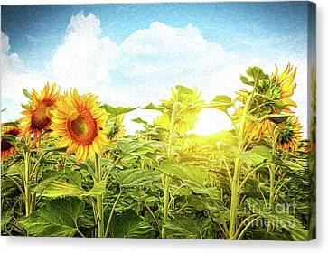 Field Of Colorful Sunflowers/digital Painting   Canvas Print by Sandra Cunningham