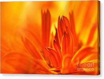 Fire Storm  Canvas Print by Elaine Manley