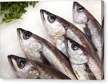 Fishes Canvas Print by Jane Rix