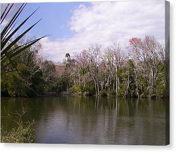 Florida Wetlands In Winter Canvas Print by PJ Jackson