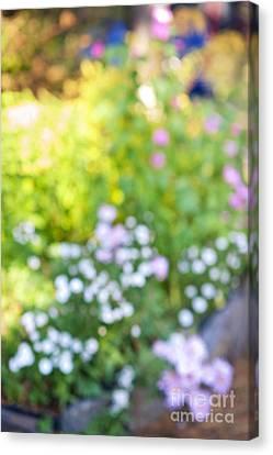 Flower Garden In Sunshine Canvas Print by Elena Elisseeva