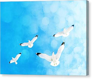 Canvas Print featuring the photograph Fly Free by Robin Dickinson