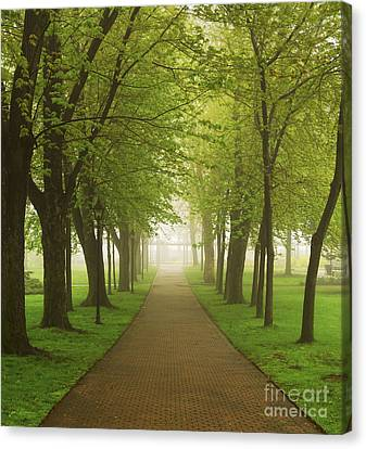 Foggy Park Canvas Print by Elena Elisseeva