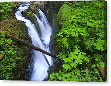 Forest And Stream In The Olympic Forest Canvas Print by Gavriel Jecan