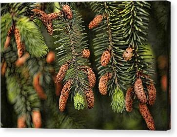 Forest Treasures Canvas Print by Bonnie Bruno