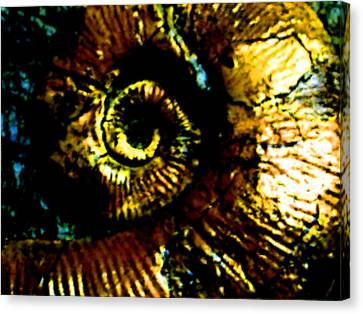 Fossil Canvas Print by Howard Perry