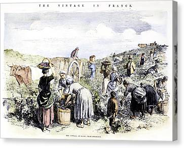 France: Grape Harvest, 1854 Canvas Print by Granger