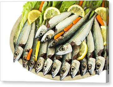 Fresh Uncoocke Fish Canvas Print by Soultana Koleska