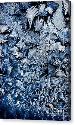 Frost Canvas Print by HD Connelly
