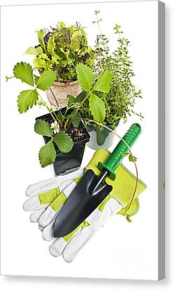 Gardening Tools And Plants Canvas Print by Elena Elisseeva