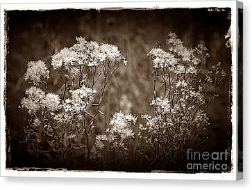 Going To Seed Canvas Print by Judi Bagwell