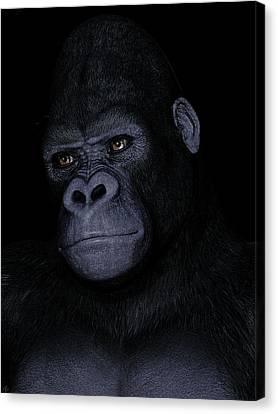 Gorilla Portrait Canvas Print by Maynard Ellis