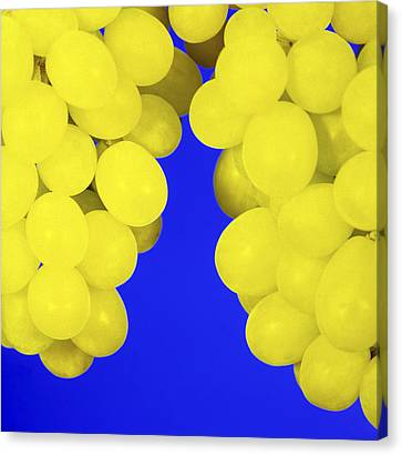 Bunch Of Grapes Canvas Print - Grapes by Johnny Greig