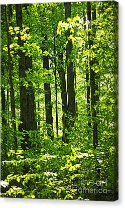 Green Spring Forest Canvas Print by Elena Elisseeva
