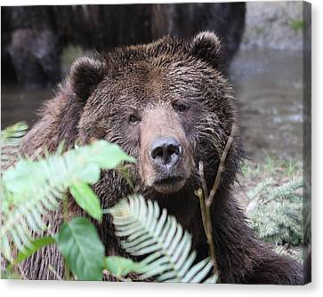 Canvas Print featuring the photograph Grizzley - 0011 by S and S Photo