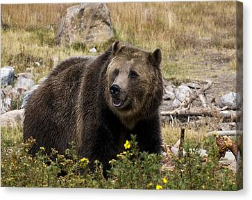 Canvas Print featuring the photograph Grizzly by Gordon Ripley