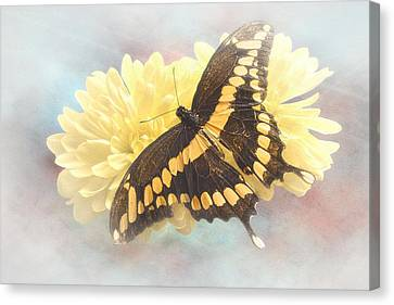 Grunge Giant Swallowtail Canvas Print by Rudy Umans