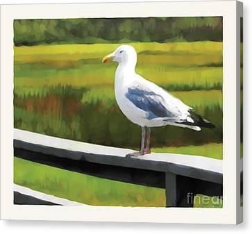 Gull One Canvas Print by David Klaboe