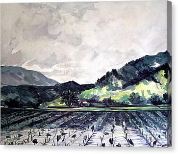 Hanalei Valley Canvas Print by Jon Shepodd