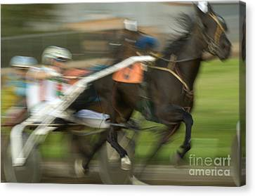 Harness Racing 8 Canvas Print by Bob Christopher