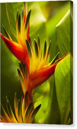 Heliconia Canvas Print by Dana Edmunds - Printscapes