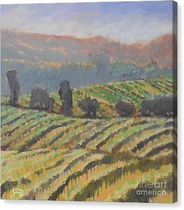 Hillside Vineyard Canvas Print by Kip Decker