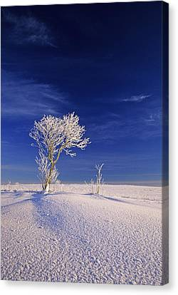 Hoar Frost On Trees, Bungay, Prince Canvas Print by John Sylvester