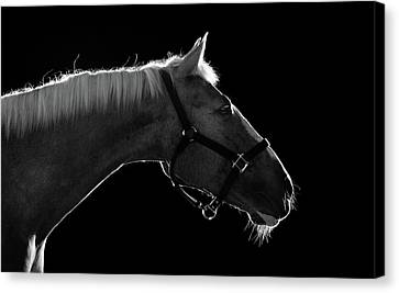 Horse Canvas Print by Arman Zhenikeyev - professional photographer from Kazakhstan