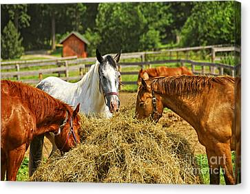 Horses At The Ranch Canvas Print by Elena Elisseeva