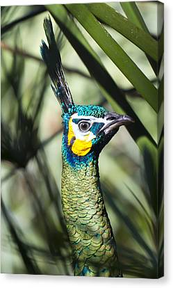 I Am Looking At You Too Canvas Print by Nicholas Evans