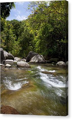 Iao River Canvas Print by Jenna Szerlag