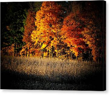 Indiana Autumn Canvas Print by Michael L Kimble
