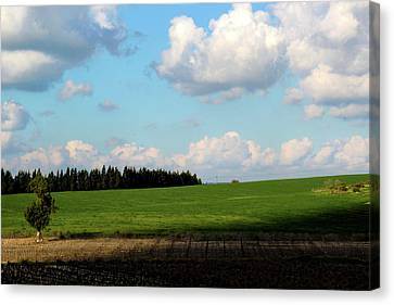 Israel's Countryside Canvas Print by Gal Ashkenazi