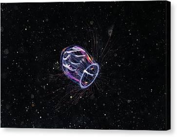 Jellyfish Canvas Print by Alexander Semenov