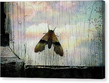 Just Arrived Canvas Print by Shirley Sirois