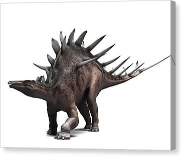 Kentrosaurus Dinosaur, Artwork Canvas Print by Sciepro
