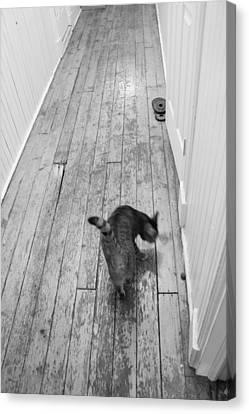 Kitty Canvas Print by Nina Mirhabibi