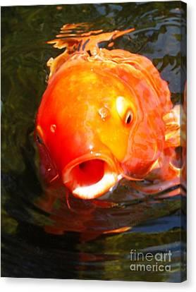 Koi Fish Canvas Print by Angela Murray
