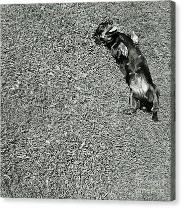 Lazy  Daschund Canvas Print by Angel  Tarantella