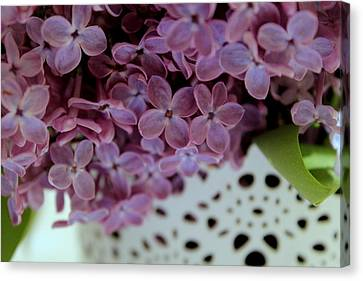 Lilac Canvas Print by Marica Jukic