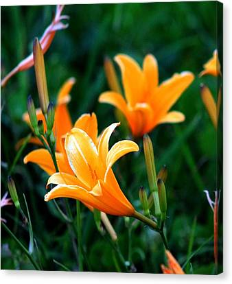 Canvas Print featuring the photograph Lilies by Elizabeth  Doran