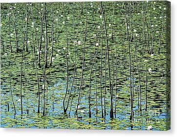 Lilly Pond Canvas Print by John Greim