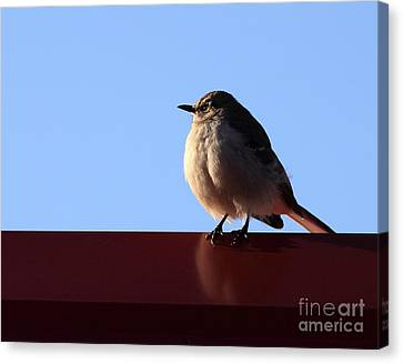 Little Bird Canvas Print by Ursula Lawrence