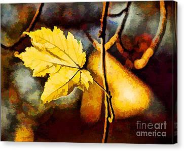 Lone Leaf Canvas Print by Darren Fisher