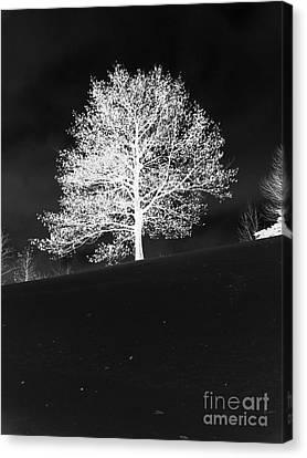 Lone Tree Canvas Print by David Bearden