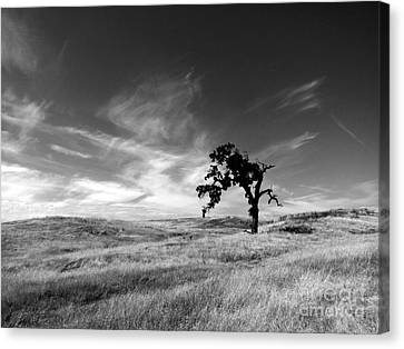 Canvas Print featuring the photograph Loneliness by Irina Hays