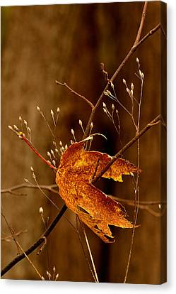 Lonely Leaf Canvas Print