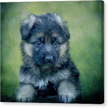 Long Coated Puppy Canvas Print by Sandy Keeton